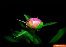 Открытка миленький живой цветок
