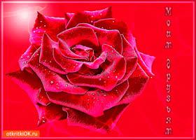 Картинка моим друзьям скромная роза