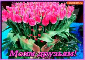 Открытка моим друзьям букет шикарных тюльпанов