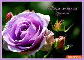 Открытка моим любимым друзьям нежная роза