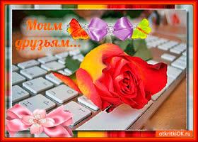 Картинка моим виртуальным друзьям розу дарю