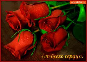Открытка от всего сердца розы букет