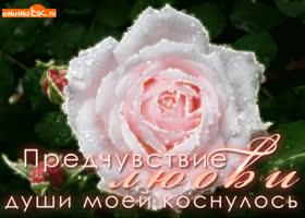 Открытка открытка предчувствие любви