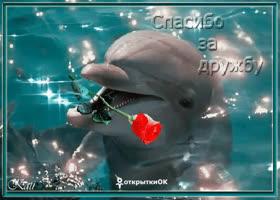 Открытка открытка спасибо за дружбу