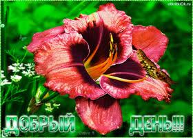 Открытка открытка добрый день цветы