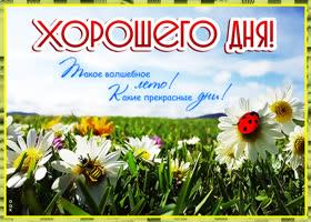 Картинка открытка хорошего летнего денька