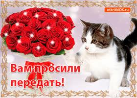 Картинка открытка кот и розы