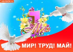 Открытка открытка мир труд май