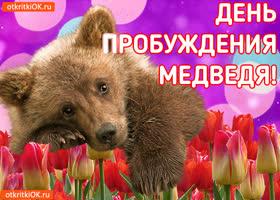 Открытка открытка с днём пробуждения медведя