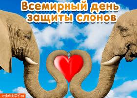 Открытка открытка с днём защиты слонов