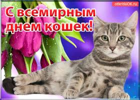 Картинка открытка с международным днём кошек