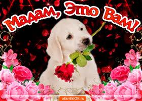 Открытка открытка с розами подруге