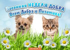 Картинка открытка весенняя неделя добра