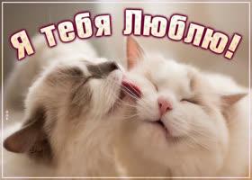 Картинка открытка я тебя люблю с кошками