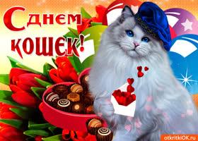 Картинка отличное поздравление с днем кошек