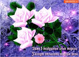 Открытка пахнут нежные розы