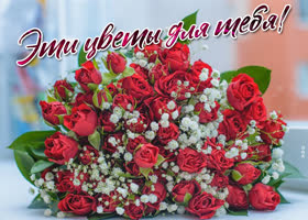Картинка плейкаст розы