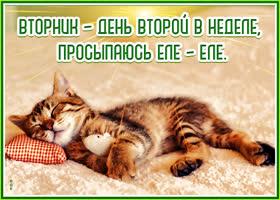 Картинка потешная открытка с вторником
