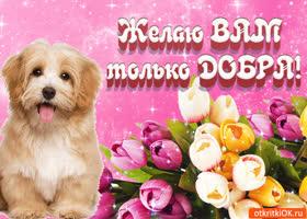 Открытка поздравительная открытка с днём доброты