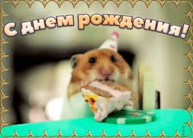 Открытка поздравление с юмором в твой день рождения