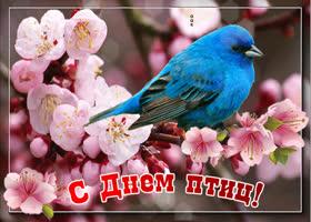 Картинка поздравляю с днем птиц