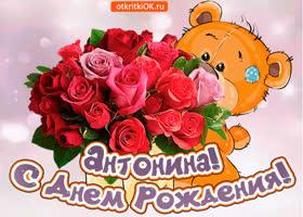 Картинка поздравляю с днём рождения антонина
