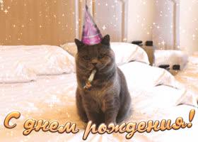 Открытка поздравляю с днем рождения с юмором