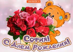 Открытка поздравляю с днём рождения софия