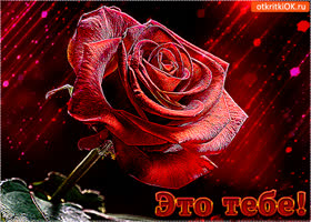 Картинка прекрасная роза gif