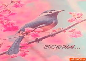 Картинка прекрасный шум весны