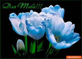 Картинка прекрасные и нежные цветы для тебя