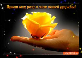 Картинка прими розу в знак дружбы