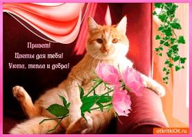 Картинка привет - цветы для тебя
