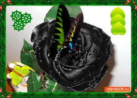 Открытка редкий цветочек для тебя