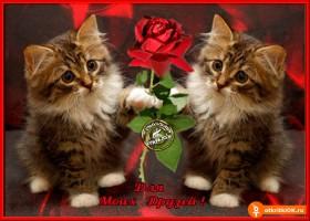 Открытка роза для моих друзей