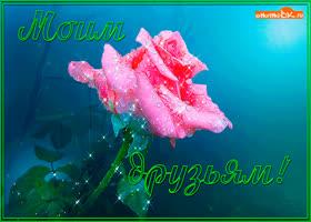 Картинка роза для друзей
