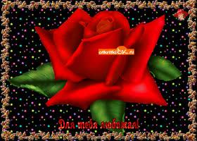 Картинка роза для тебя, любимая