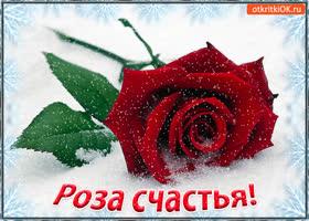 Картинка роза счастья! для тебя!