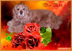 Открытка розы сверкают для тебя