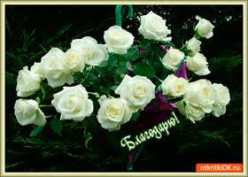 Картинка розы в качестве благодарности