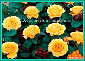 Открытка розы в знак хорошего настроения