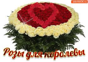 Картинка розы для королевы!