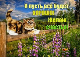 Открытка рыжий кот счастья принесёт