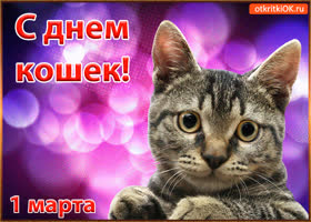 Картинка с днём кошек 1 марта