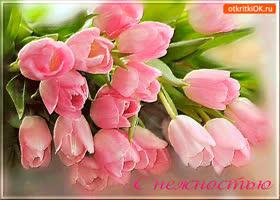 Картинка с нежностью букетик тюльпанов