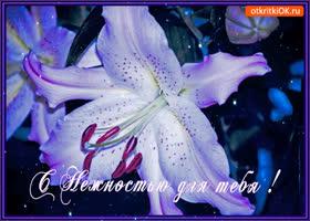 Картинка с нежностью для тебя эта лилия