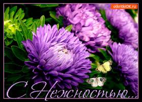 Открытка с нежностью тебе хризантемы