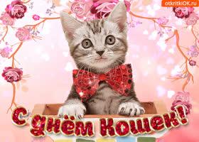 Открытка с праздником любимых кошек