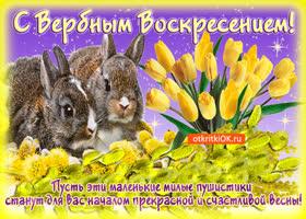 Картинка с прекрасным началом весны, с вербным воскресеньем