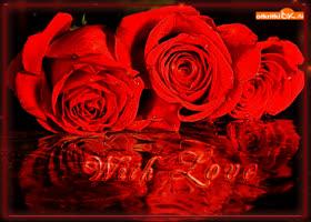 Открытка самые красивые розы